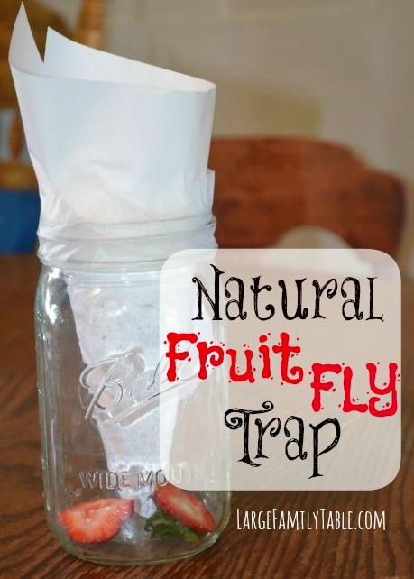 Natural Fruit Fly Trap