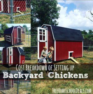 Cost Breakdown of Setting Up Backyard Chickens
