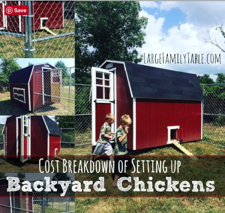 cost of backyard chickens