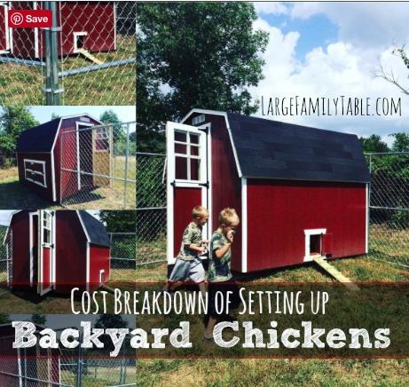 cost of backyard chickens