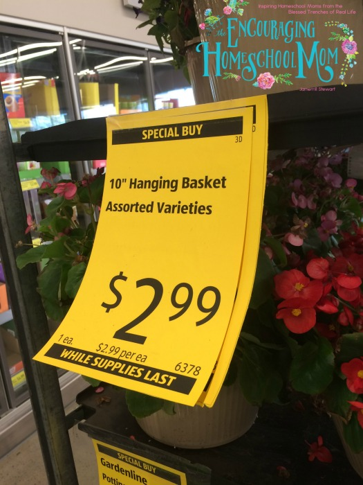 Aldi Flower Basket Deal