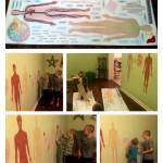 Human Body Science Wal