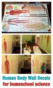 Human Body Science Wal