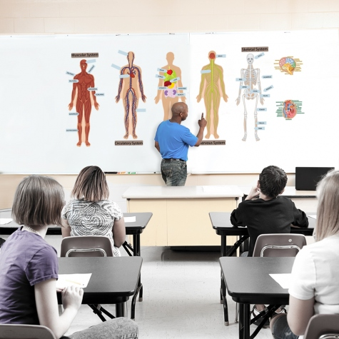 Human Body Wall Science Decal