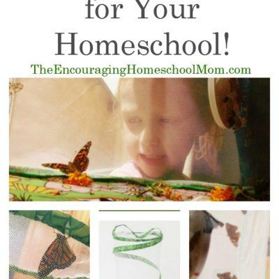 The Best GIANT Butterfly Garden for Your Homeschool!